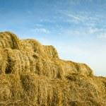 Giant haystack — Stock Photo #54827237