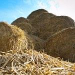 Haystacks — Stock Photo #59989673
