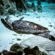 Sea turtle and bottom sharks — Stock Photo #61185001