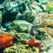 Coral reef with the red urchins — Stock Photo #61185003