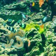 Coral reef — Stock Photo #63445935