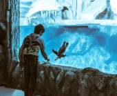 Boy near the penguin aquarium — Stock Photo