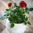 Roses in vase view — Stock Photo #67835481
