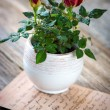 Roses in vase view — Stock Photo #67835629