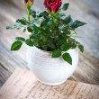 Roses in vase view — Stock Photo #67835811