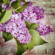 Flowers lilac on old boards. — Stock Photo #61797521