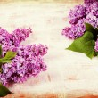 Flowers lilac on  old boards. — Stock Photo #61812277