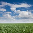 Landscape grass sky — Stock Photo #61812531