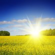 Sunny field landscape — Stock Photo #62289727