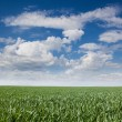 Grass and sky with clouds — Stock Photo #64399381