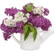 Lilac flowers in watering can — Stock Photo #64992167