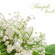 Lily of the valley flowers — Stock Photo #64996755