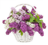 Spring bouquet. Lily of the valley and lilac in a basket isolate — Foto Stock