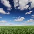 Panoramic beautiful landscape grass and cloud — Stock fotografie #76128709