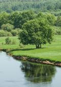 Large green tree on the riverbank — Stock Photo