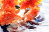 Цветки над водой — Стоковое фото
