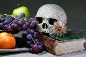 Vintage Still Life With Skull — Stock Photo