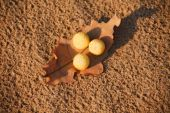 Dry leaf with  yellow balls — Stock Photo