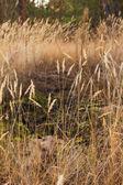 Autumn dry grass — Stockfoto