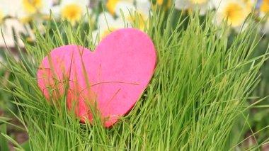 Heart growing in green grass — Stock Video