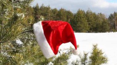 Santa Claus Hat on tree — Stock Video