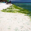 Seaweed in turquoise sea, water plant on Boracay island — Stock Photo #55262103