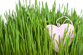 Love card decorated with heart on green grass — Fotografia Stock