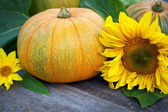 Freshly picked pumpkins with sun flower — Photo