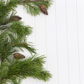 Spruce tree branches frame, evergreen garland — Stock fotografie