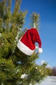 Santa hat on spruce tree in forest — Стоковое фото