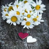 Красивые свежие маргаритки украшены сердцами на деревянной структуре — Стоковое фото