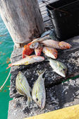 Catched fish on wooden pier — Stock Photo