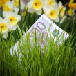 Постер, плакат: Euro banknote in green grass