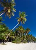 Coconut palm trees on tropical beach, Boracay — Stock Photo