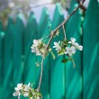 A blooming branch of apple tree on sky background — Stock Photo #67392003