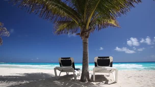 Dos camas bajo las palmeras de la playa — Vídeo de stock