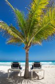 Two beach beds under palm tree on  beachfront — Стоковое фото