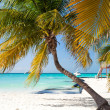 Tropical white sand beach with coconut palm trees. — Stock Photo #75126707
