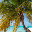 Tropical white sand beach with coconut palm trees. — Stock Photo #75126709