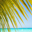 Tropical white sand beach with coconut palm trees. — Stock Photo #75128975