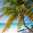 Tropical white sand beach with coconut palm trees. — Stock Photo #75129033