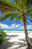 Tropical beach with coconut palm tree, white sand and turquoise — Stock Photo