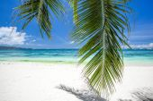 Tropical beach with coconut palm tree leafs, white sand and turq — Stock Photo