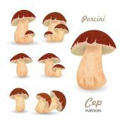 Mushrooms porcini — Stock Vector