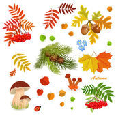 Autumn collection — Stock Vector
