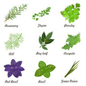 Collection of herbs — Stock Vector