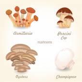 Na białym tle grzybów jadalnych — Wektor stockowy