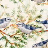 Birds on pine branch — Photo