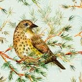 Cute birds on pine branch — Stockfoto