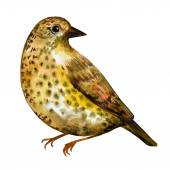 Watercolor painting bird — Stock Vector